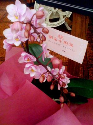 ぷかさんからいただいたお花